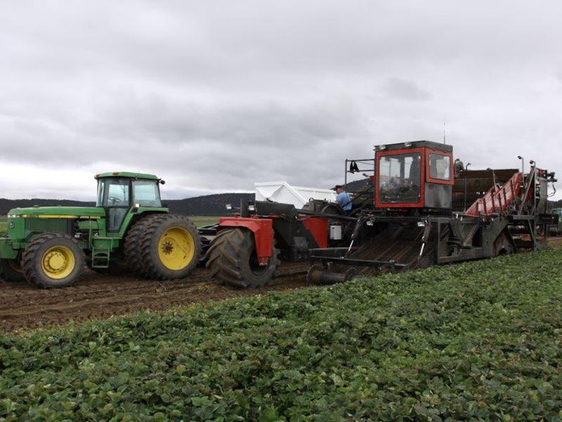 Strawberry Harvester powered by John Deere